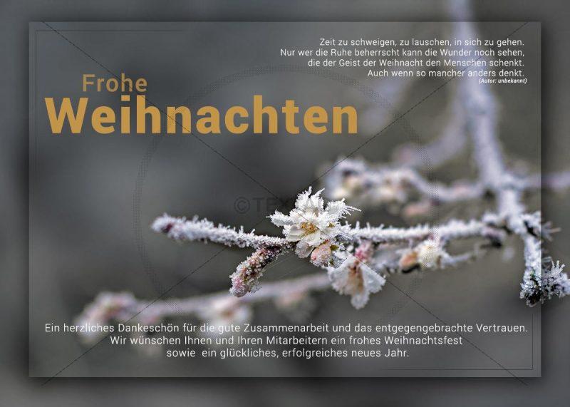 romantische Weihnachts E-Card mit Kirschblüte und Raureif (293)